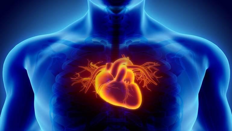 FitFatory iesaka: kā sportistiem uzlabot sirds veselību?